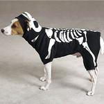 View Image 1 of Skeleton Glow Bones Dog Costume by Casual Canine - Black