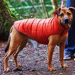 View Image 2 of Skyline Puffy Reversible Dog Vest  - Pumpkin/Ink