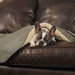 View Image 1 of Slumber Pet ThermaPet Burrow Dog Blanket