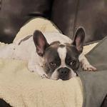 View Image 4 of Slumber Pet ThermaPet Burrow Dog Blanket