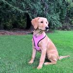 View Image 1 of Soft & Comfy Mesh Dog Harness - Pink