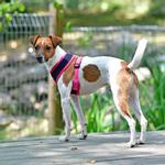 View Image 4 of Soft Mesh Dog Harness by Puppia - Navy
