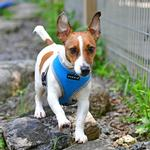 View Image 4 of Soft Mesh Dog Harness by Puppia - Sky Blue