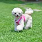 View Image 2 of Soft Mesh Vest Dog Harness by Puppia - Pink