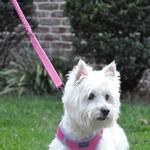 View Image 2 of Soft Pull Traffic Dog Leash by Doggie Design - Candy Pink