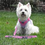 View Image 3 of Soft Pull Traffic Dog Leash by Doggie Design - Candy Pink