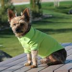 View Image 1 of Solid Dog Polo by Doggie Design - Green Flash