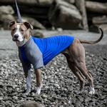 View Image 2 of Solis UV Coverup Dog Shirt - Electric Blue