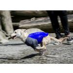 View Image 3 of Solis UV Coverup Dog Shirt - Electric Blue