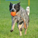 View Image 2 of Speed Sling Ball by Major Dog - Orange
