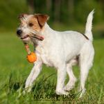 View Image 3 of Speed Sling Ball by Major Dog - Orange