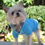 View Image 2 of Sport Dog Hoodie by Doggie Design - Blue Curacao