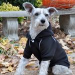 View Image 2 of Sport Dog Hoodie by Doggie Design - Jet Black