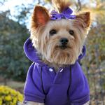 View Image 2 of Sport Dog Hoodie by Doggie Design - Ultra Violet
