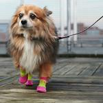 View Image 2 of Sport PAWks Dog Socks - Lime/Azalea