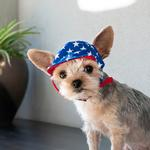 View Image 10 of Star Dog Hat by Dogo