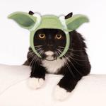 View Image 1 of Star Wars Yoda Hood Cat Costume