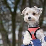 View Image 2 of Step-in Cirque Dog Harness - Coral