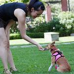 View Image 1 of Step-in Cirque Dog Harness - Raspberry