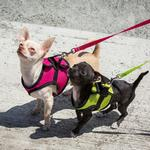 View Image 2 of Step-in Cirque Dog Harness - Raspberry