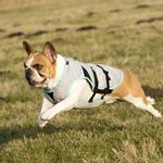 View Image 2 of Suitical Dry Cooling Dog Vest