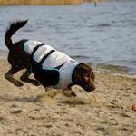 View Image 3 of Suitical Dry Cooling Dog Vest