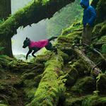 View Image 2 of Sun Shower Dog Rain Jacket by RuffWear - Alpenglow Pink