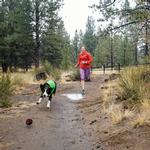 View Image 2 of Sun Shower Dog Rain Jacket by RuffWear - Meadow Green