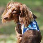 View Image 4 of Surfboard Blue and Green Cool Mesh Dog Harness with Matching Leash by Doggie Design