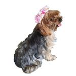 View Image 2 of Victorian Lace Pirate Dog Hat - Pink