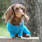 View Image 5 of Sweet Dreams Embroidered Dog Pajamas by Doggie Design - Blue