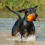 View Image 2 of Swimming Eddy Dog Toy by Major Dog