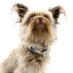 View Image 2 of Tartan Adjustable Clip Dog Collar by RC Pet - Tan