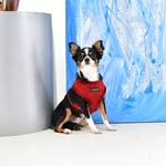 View Image 4 of Terry Basic Style Dog Harness By Puppia - Wine