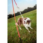 View Image 4 of Tether Tug Dog Toy