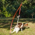 View Image 6 of Tether Tug Dog Toy