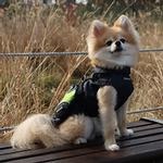 View Image 2 of Teton Dog Vest by Puppia Life - Navy