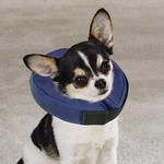 View Image 5 of Total Pet Health Inflatable Pet Collar - Blue