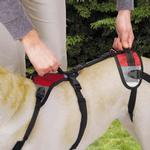 View Image 2 of Total Pet Health Lift & Go Dog Leads - Red