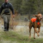View Image 1 of Track Dog Jacket by RuffWear - Blaze Orange
