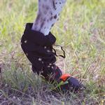 View Image 7 of Ultra Paws Dog Leg Wraps - Black