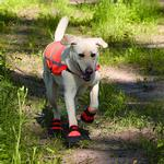 View Image 5 of Ultra Paws Rugged Dog Boots - Orange