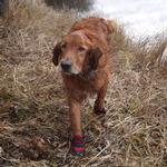 View Image 7 of Ultra Paws Rugged Dog Boots - Red