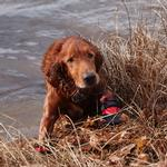 View Image 6 of Ultra Paws Rugged Dog Boots - Red
