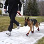 View Image 8 of Ultra Paws Rugged Dog Boots - Red