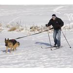 View Image 3 of Ultra Paws Skijor Package
