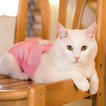 View Image 2 of Vala Cat Tank Top by Catspia - Pink
