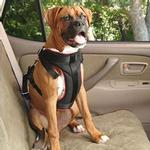 View Image 1 of Vehicle Safety Dog Car Harness