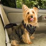 View Image 4 of Vehicle Safety Dog Car Harness