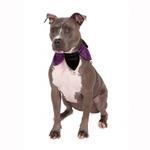 View Image 1 of Velvet Jester Dog Collar Scrunchie - Black and Purple